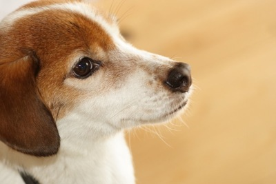 真っすぐに何かを見つめる犬の横顔