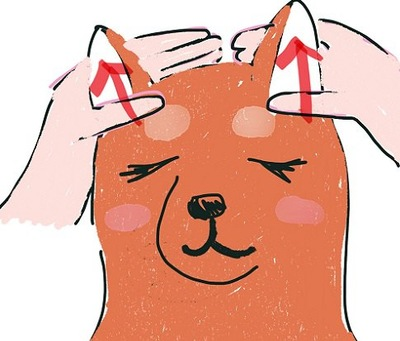 イラスト 立耳犬 耳マッサージ 矢印まっすぐ上