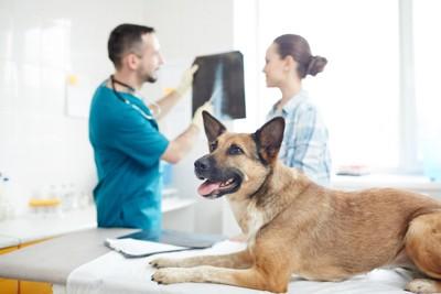 飼い主と話してる獣医師と診察台の上の犬