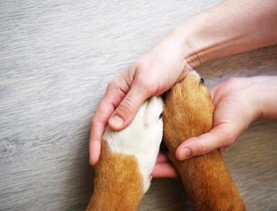 人の手の上に置かれた犬の手