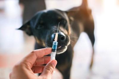 ワクチンの注射と犬