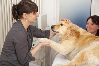 病院で獣医師に診察されている犬