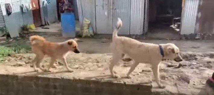 歩く野良犬