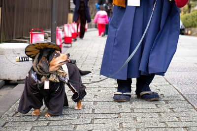 京都の街並みと犬