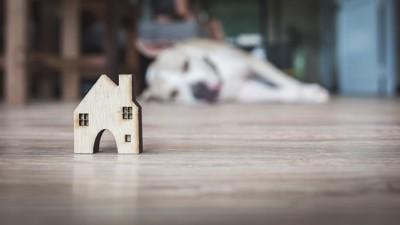 積み木の家を見る犬
