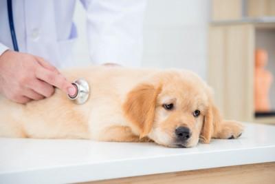 病院で診察を受ける子犬