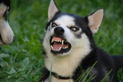 犬に向かって怒る犬