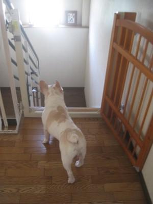 白フレが階段を眺める写真