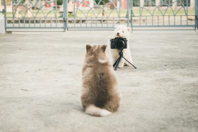 子犬を撮る子犬