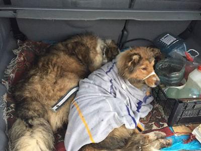 車の中に入れられた2頭の犬