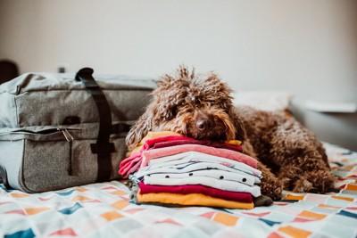 積まれた服の上でゴロゴロする犬