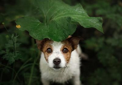 大きな葉っぱの下にいる犬