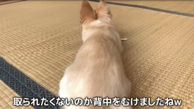 背中を向けてる犬