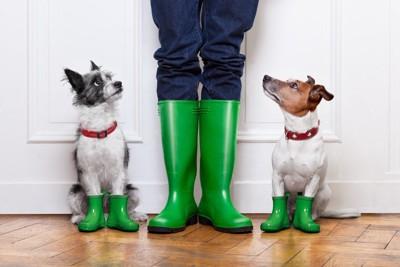 長靴を履いている人の足と犬