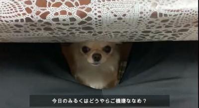 机の下からのぞいてる犬