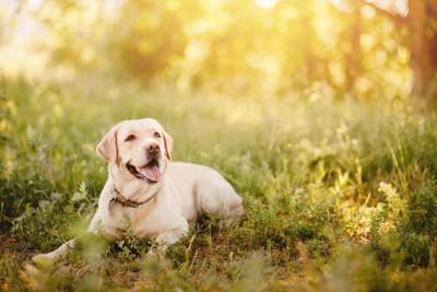 夏に外で過ごす犬