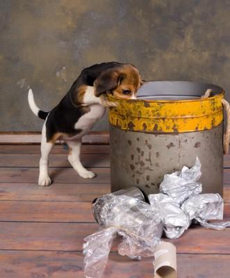 ゴミ箱を漁る子犬