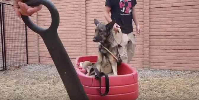 ワゴンに乗った犬