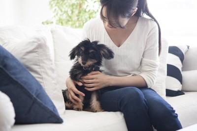 ソファーに座る飼い主にぴったりと寄り添う犬