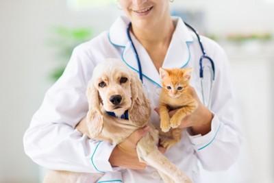 獣医さんに抱っこされる犬と猫