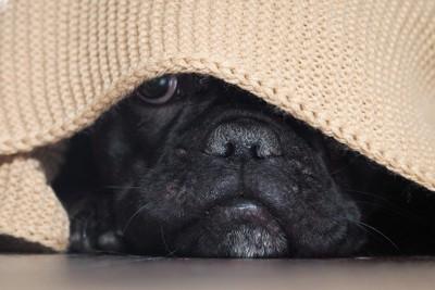 いじけているかのように隠れる犬