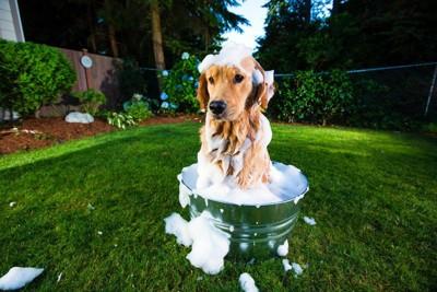 外でシャンプーする犬