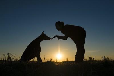 しつけをする女性と犬のシルエット