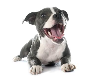 口を開けて笑顔を見せる犬