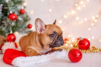 クリスマスの装飾品と子犬