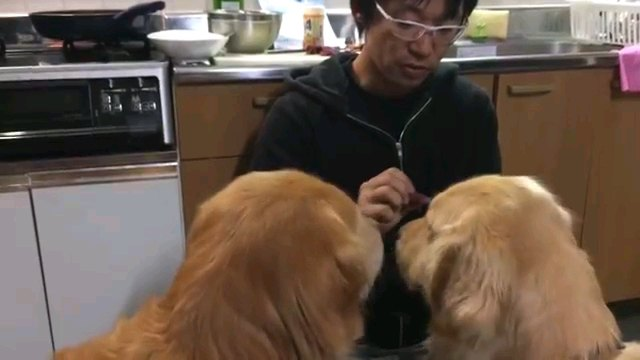 二匹の犬の後頭部