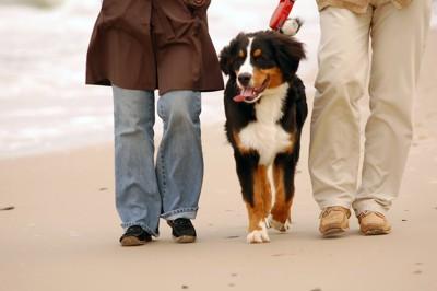 海辺を散歩中の犬