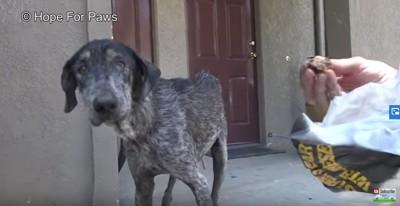 カメラを警戒する犬