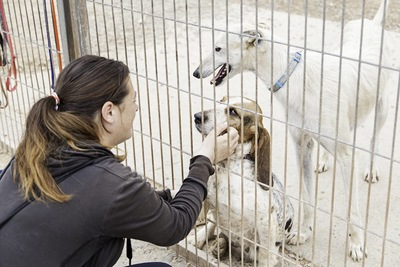 檻の中にいる二匹の犬を撫でる女性