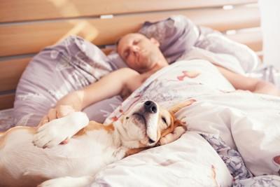 飼い主と一緒にベッドで寝る犬