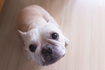 床に座ってこちらを見つめる犬