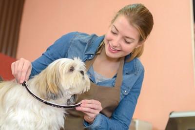 迷子札を犬に付ける女性