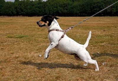 二本足で立つ犬