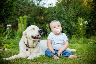 芝生にいる大型犬と赤ちゃん
