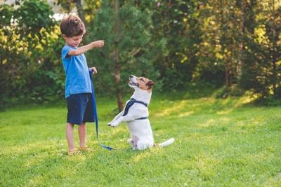 屋外で男の子と遊ぶジャックラッセルテリア