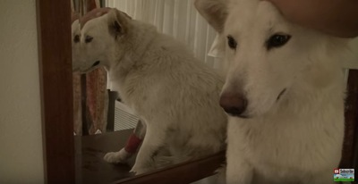 鏡の前に座る犬