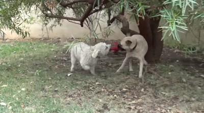 他の犬とおもちゃと遊ぶ犬