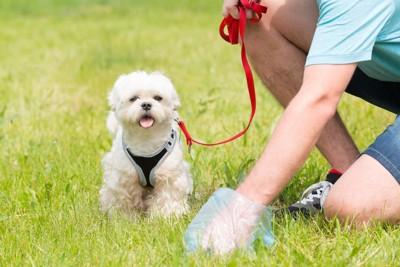 ウンチをとる飼い主と待つ犬