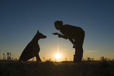 犬と向き合ってしつけをする女性