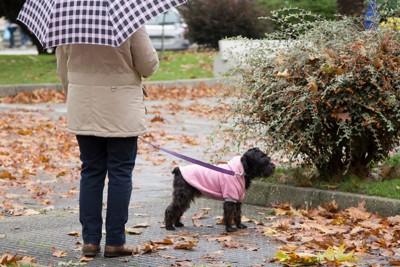 傘をさしている人と黒い犬
