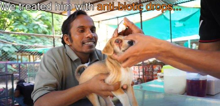 子犬を治療します