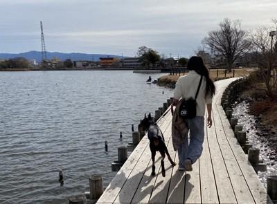 愛犬と歩く道