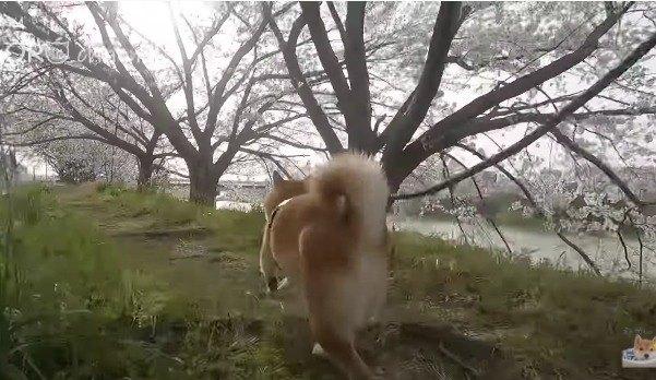 走るわんこ