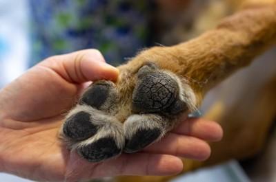 犬の足の裏