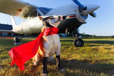 ヒーローの格好をした犬