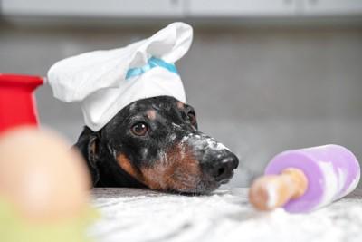 粉まみれの犬